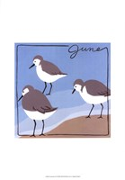 Avian June Fine Art Print
