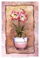 Spring Amaryllis Fine Art Print