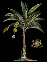 Palm & Crest on Black I Fine Art Print