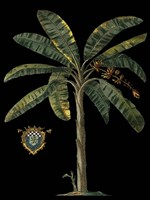 Palm & Crest on Black II Fine Art Print