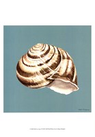 Shell on Aqua I Framed Print
