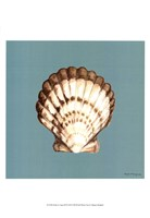 "Shell on Aqua III by Megan Meagher - 13"" x 19"""