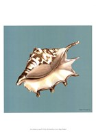 Shell on Aqua IV Framed Print