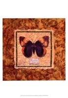 "Diva Moth by Abby White - 13"" x 19"" - $12.99"