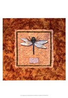 """Dragonfly by Abby White - 13"""" x 19"""""""