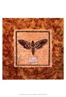 Manduca Moth Fine Art Print