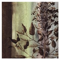 "Painted Botanical IV by John Butler - 19"" x 19"""