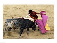 High angle view of a matador fighting with a bull, Spain Fine Art Print