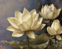 Lotus II Fine Art Print