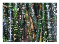 Bamboo Graffiti - various sizes, FulcrumGallery.com brand