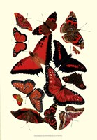 "Red Butterfly Study by Vision Studio - 13"" x 19"""