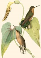 Delicate Hummingbird II Fine Art Print
