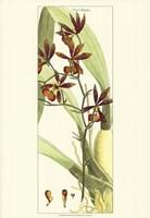 Brilliant Orchids II Framed Print