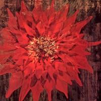 Floral Frenzy Red IV - square Framed Print