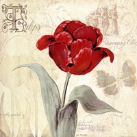 Tulip Gem I Framed Print
