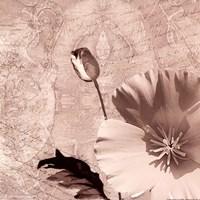 Vintage Rose I Fine Art Print