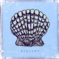 "Scallop - blue by Stephanie Marrott - 8"" x 8"""