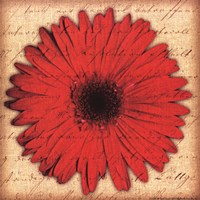 Red Gerbera Fine Art Print