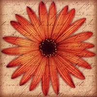 Orange Daisy Fine Art Print
