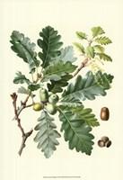 "Acorns & Foliage I by Vision Studio - 13"" x 19"""