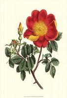Vibrant Blooms IV Fine Art Print