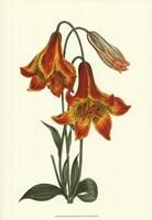 Vibrant Blooms III Fine Art Print