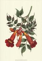 Vibrant Blooms II Fine Art Print