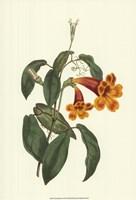 Vibrant Blooms I Fine Art Print