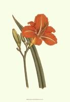 """13"""" x 19"""" Orange Flowers"""