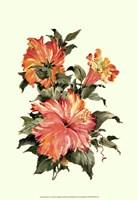 Hibiscus I Fine Art Print