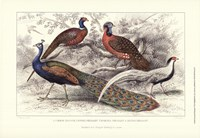 Peacock & Pheasants Framed Print