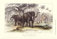 "Asiatic Elephants by J. Stewart - 19"" x 13"""