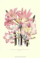 Lily Garden IV Fine Art Print