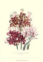 Lily garden III Fine Art Print