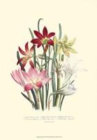 Lily Garden I Fine Art Print