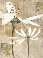 Pencil Floral II Fine Art Print