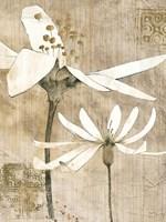 Pencil Floral II Framed Print