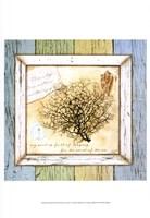 """Sea Treasures II by Beth Anne Creative - 13"""" x 19"""""""