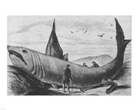 Basking Shark Harper's Weekly October 24, 1868, 1868 - various sizes