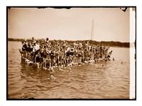 Hawaiian Swimmers at Potomac Tidal Basin - various sizes