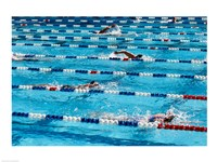 High angle view of people swimming in a swimming pool, International Swimming Hall of Fame, Fort Lauderdale, Florida, USA Fine Art Print