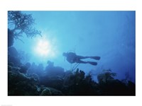 Low angle view of a scuba diver swimming underwater, Belize Fine Art Print