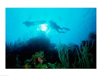 Low angle view of two scuba divers swimming underwater, Belize - various sizes