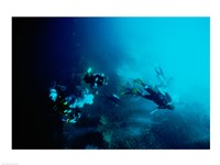 Five scuba divers swimming underwater, Blue Hole, Belize - various sizes