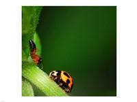 Ladybug and Friend - various sizes