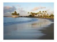 Waikiki Beach And Palm Trees - various sizes