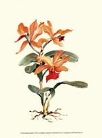 Orange Orchid Fine Art Print