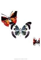 Butterflies Dance III Framed Print