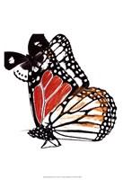 Butterflies Dance IV Framed Print
