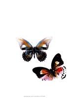 Butterflies Dance VI Framed Print